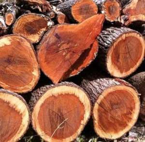 3% Sandalwood Essenttial Oil in Organic Jojoba Oil (10ml)
