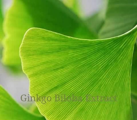 Ginkgo Liquid Extract ( UK ) -30ml