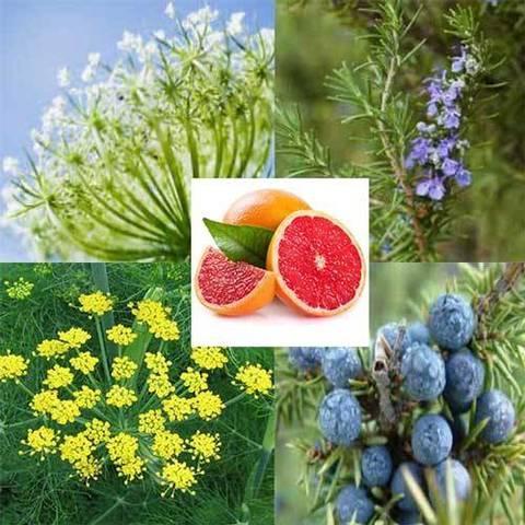 Organic Purifying Detox Essential Oil Blends 10ml