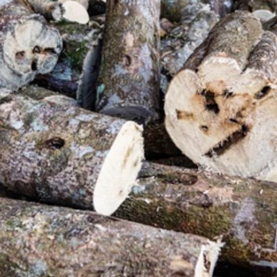 Agarwood Subintegra Essential Oil (OUD)  5ml